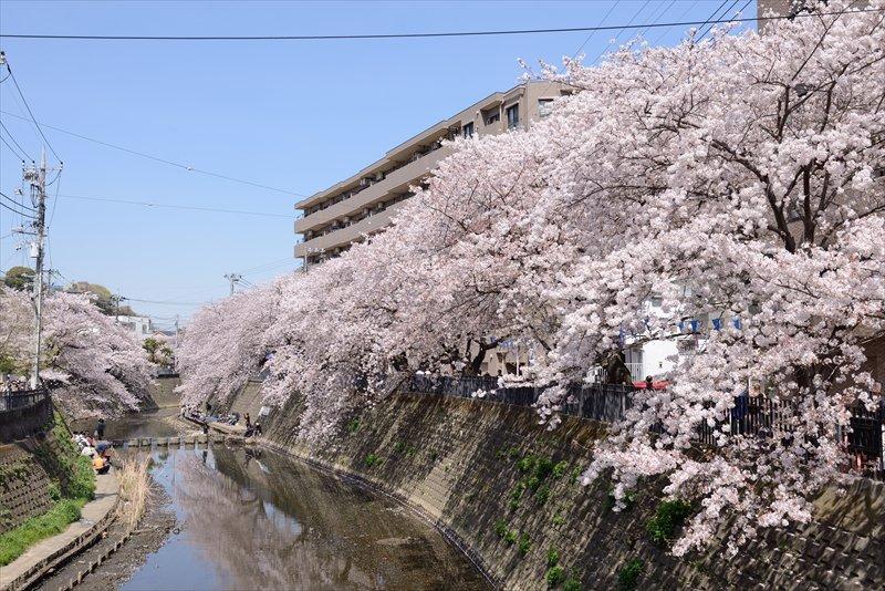 247939_oookagawa013